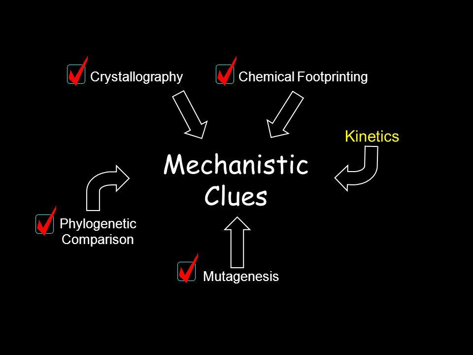 Mechanistic Clues CrystallographyChemical Footprinting Kinetics Mutagenesis Phylogenetic Comparison