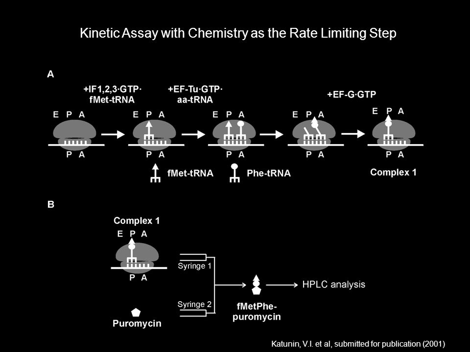 Kinetic Assay with Chemistry as the Rate Limiting Step Katunin, V.I. et al, submitted for publication (2001) /