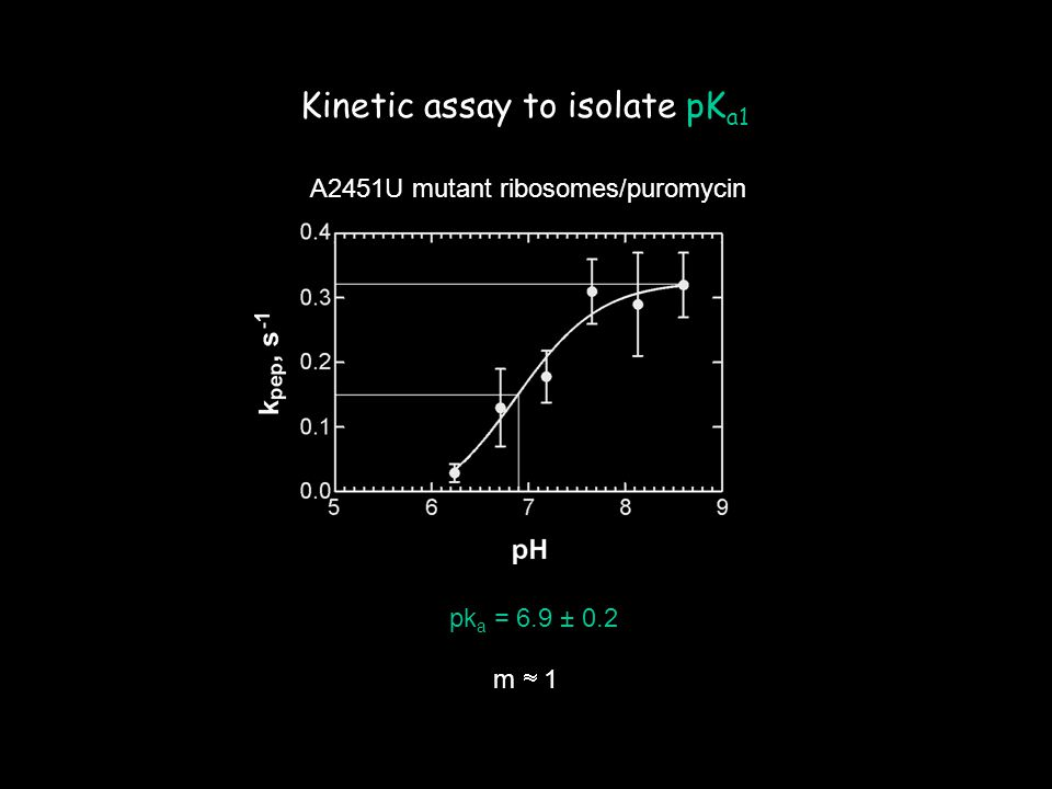 A2451U mutant ribosomes/puromycin pk a = 6.9 ± 0.2 m  1 Kinetic assay to isolate pK a1
