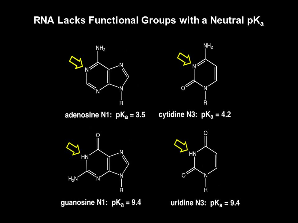 RNA Lacks Functional Groups with a Neutral pK a