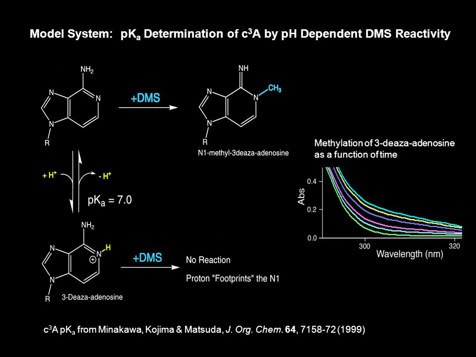 A2451U mutant ribosomes/puromycin pk a = 6.9 ± 0.2 m  1 Kinetic assay to isolate pK a1
