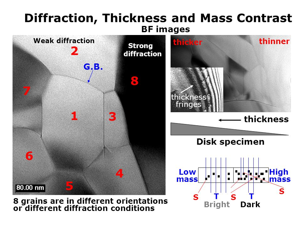 Diffraction, Thickness and Mass Contrast Disk specimen thickness thinner thicker 1 2 3 4 5 6 7 8 G.B.......................... High mass Low mass TT S