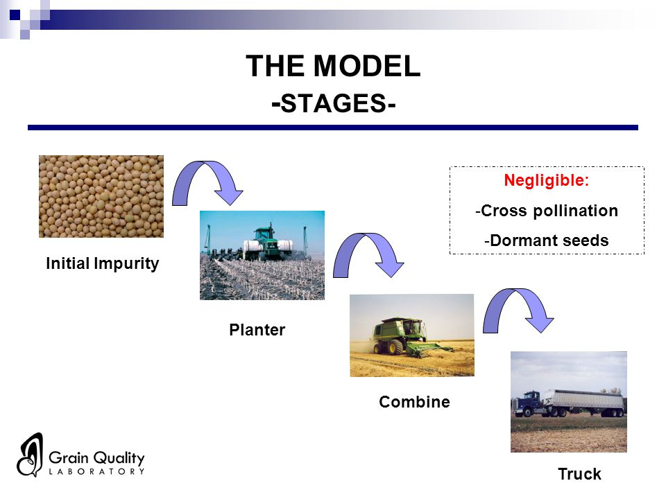 THE MODEL - STAGES- Initial Impurity Planter Combine Truck Negligible: -Cross pollination -Dormant seeds