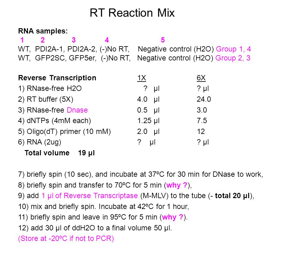 RT Reaction Mix Reverse Transcription 1X6X 1) RNase-free H2O .