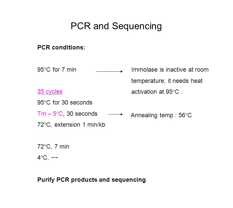 PCR and Sequencing PCR conditions: 95  C for 7 min 35 cycles 95  C for 30 seconds Tm – 5  C, 30 seconds 72  C, extension 1 min/kb 72  C, 7 min 4