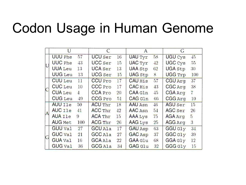 Codon Usage in Human Genome