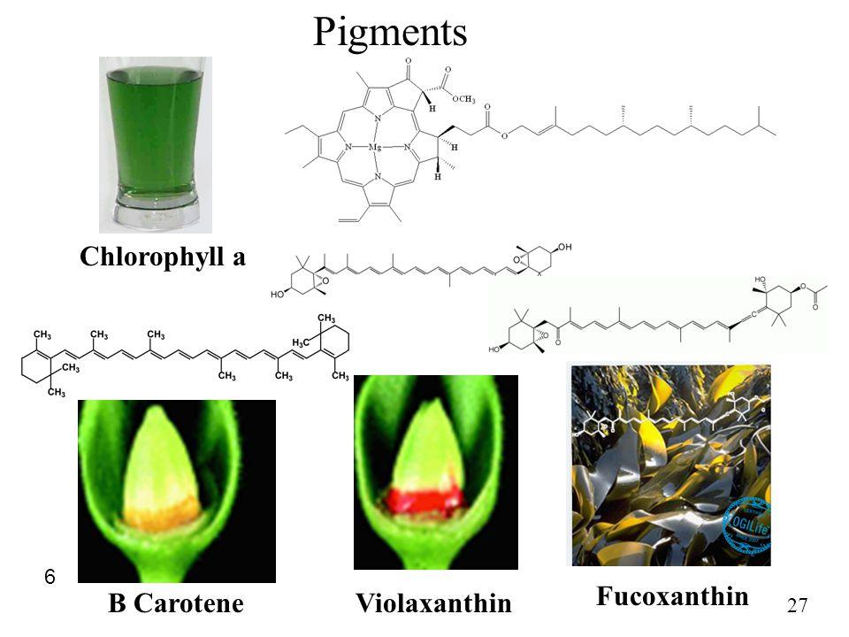 27 Chlorophyll a 6 B CaroteneViolaxanthin Fucoxanthin Pigments