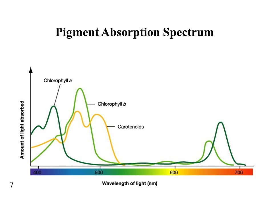 Pigment Absorption Spectrum 7