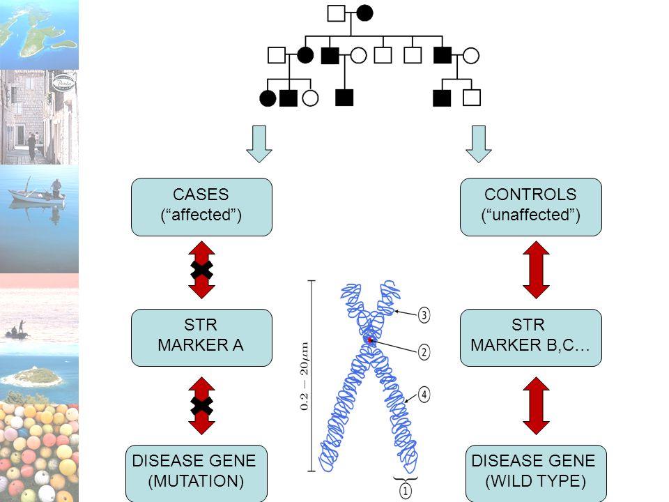 CASES ( affected ) CONTROLS ( unaffected ) STR MARKER A STR MARKER B,C… DISEASE GENE (MUTATION) DISEASE GENE (WILD TYPE)