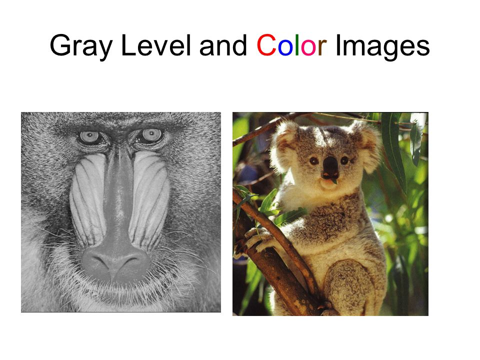 Pixels in a Gray Level Image