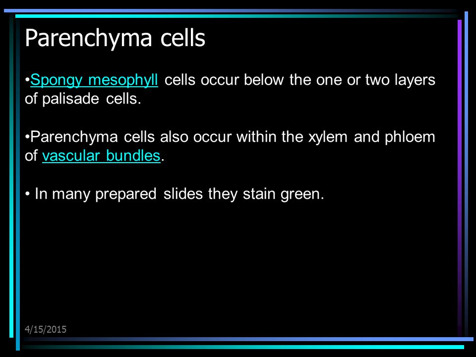 4/15/2015 Parenchyma cells Spongy mesophyll cells occur below the one or two layers of palisade cells.Spongy mesophyll Parenchyma cells also occur wit