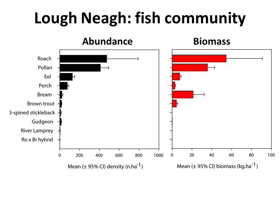 Lough Neagh: fish community AbundanceBiomass