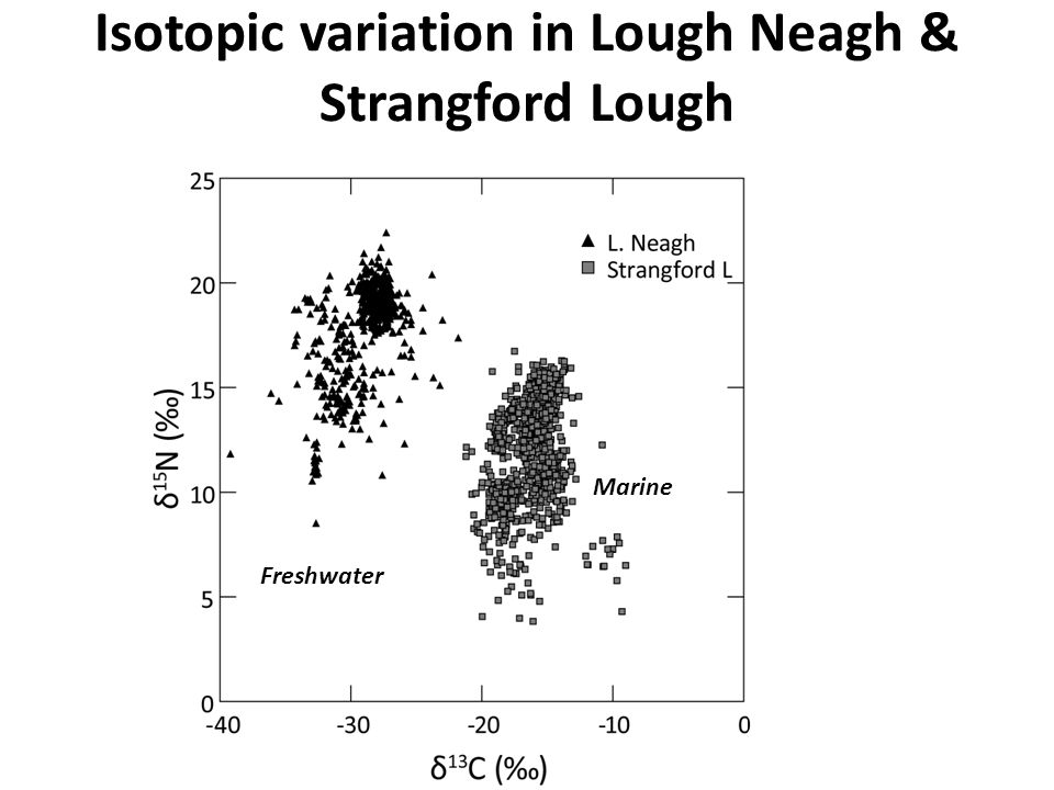 Isotopic variation in Lough Neagh & Strangford Lough Freshwater Marine