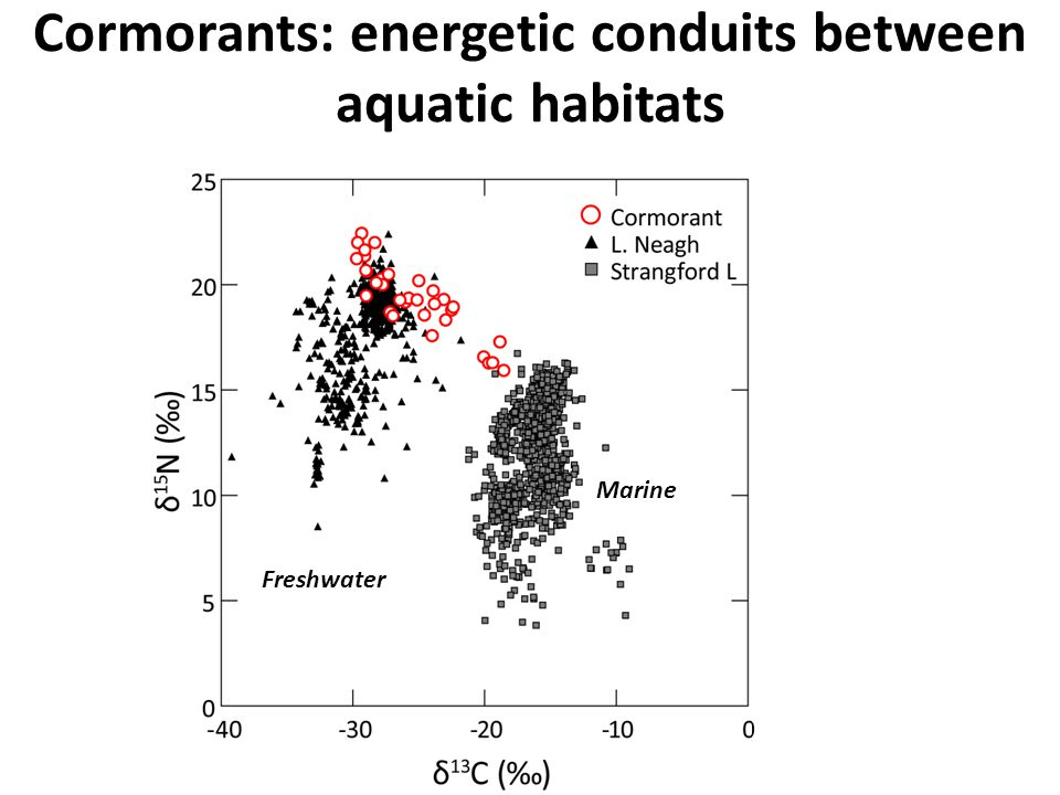 Cormorants: energetic conduits between aquatic habitats Freshwater Marine