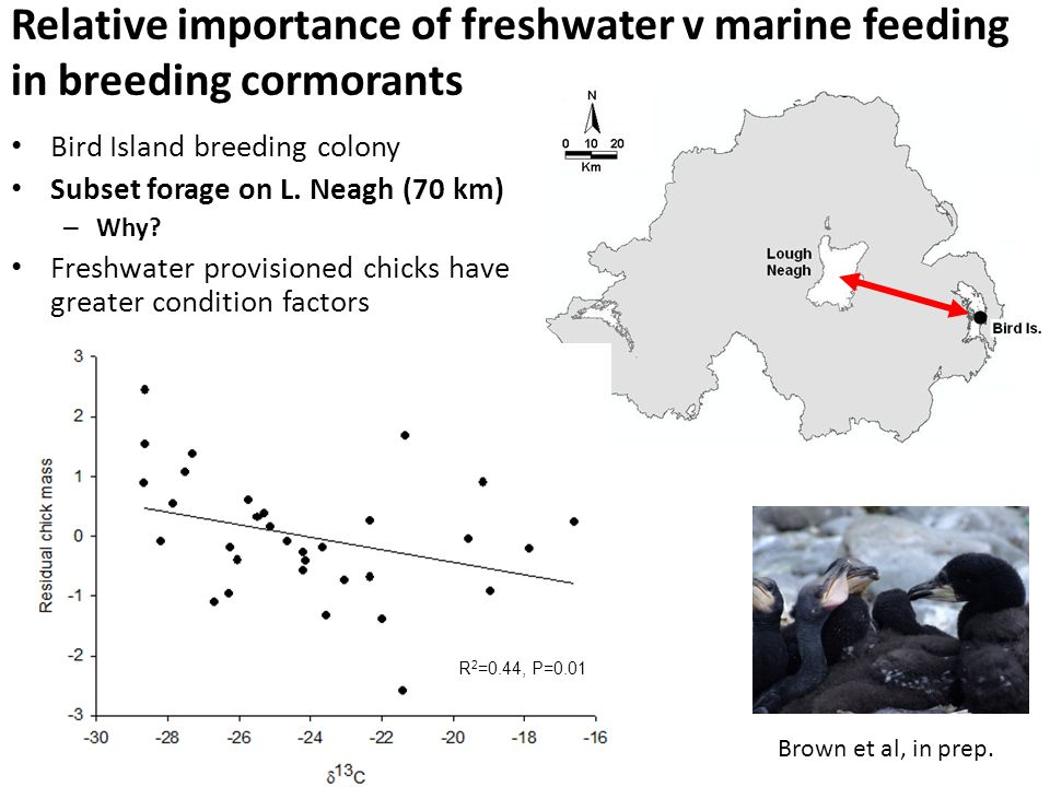 Relative importance of freshwater v marine feeding in breeding cormorants Bird Island breeding colony Subset forage on L.