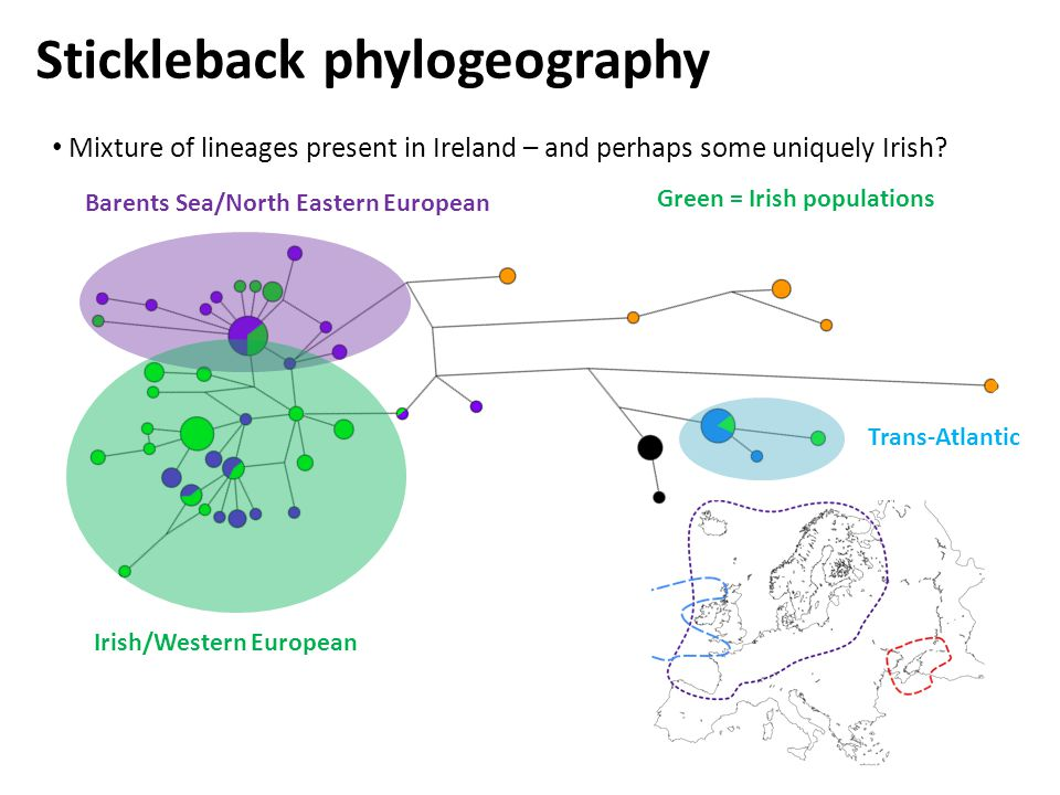 Mixture of lineages present in Ireland – and perhaps some uniquely Irish.