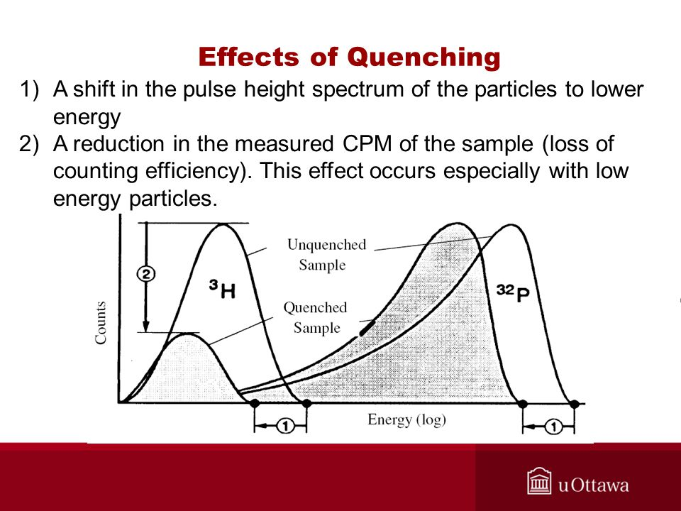 Effects of Quenching 1)A shift in the pulse height spectrum of the particles to lower energy 2)A reduction in the measured CPM of the sample (loss of counting efficiency).