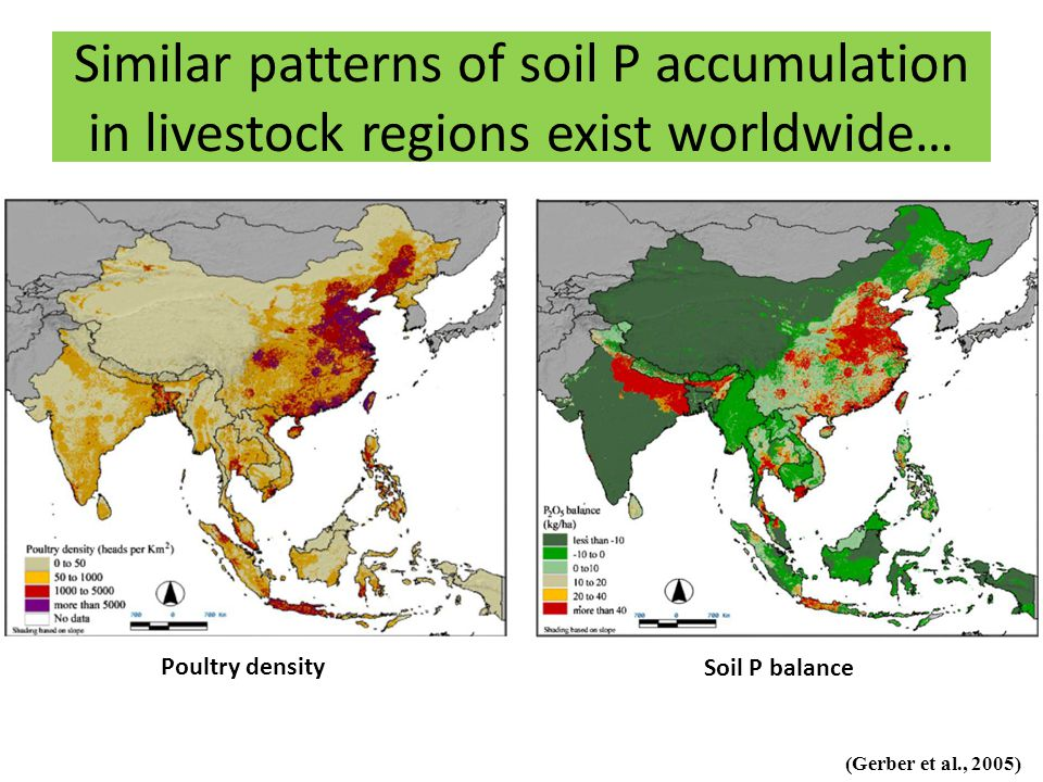 Similar patterns of soil P accumulation in livestock regions exist worldwide… (Gerber et al., 2005) Poultry density Soil P balance