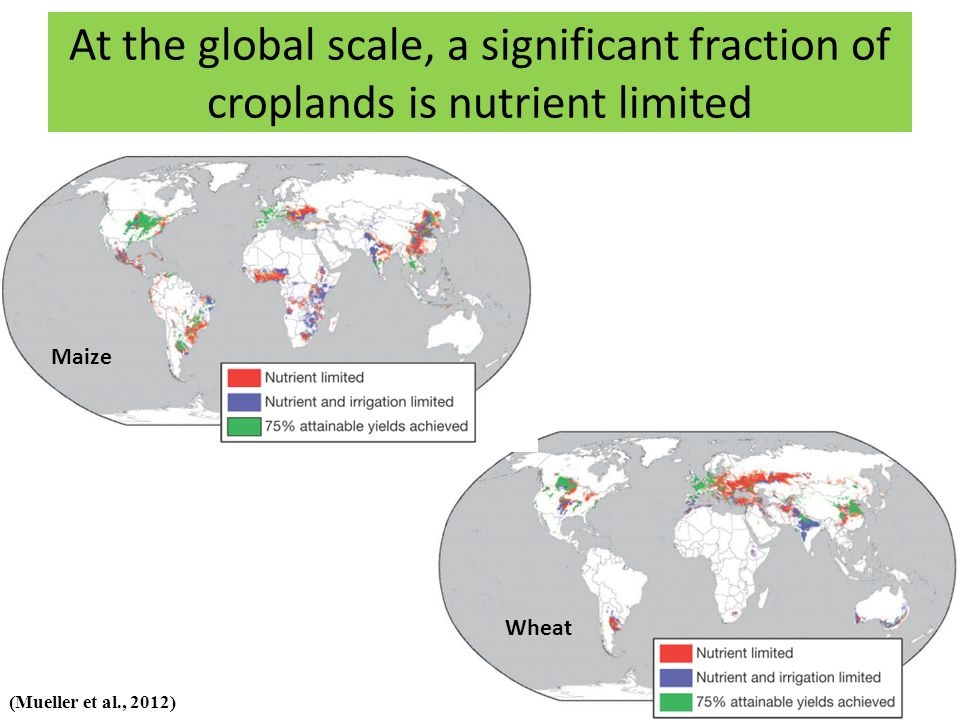 At the global scale, a significant fraction of croplands is nutrient limited Maize Wheat (Mueller et al., 2012)