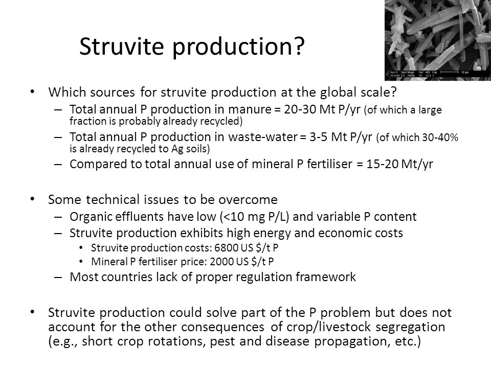 Struvite production? Which sources for struvite production at the global scale? – Total annual P production in manure = 20-30 Mt P/yr (of which a larg