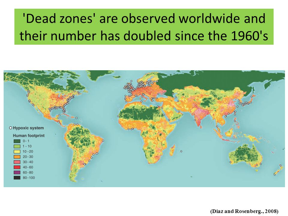 'Dead zones' are observed worldwide and their number has doubled since the 1960's (Diaz and Rosenberg., 2008)