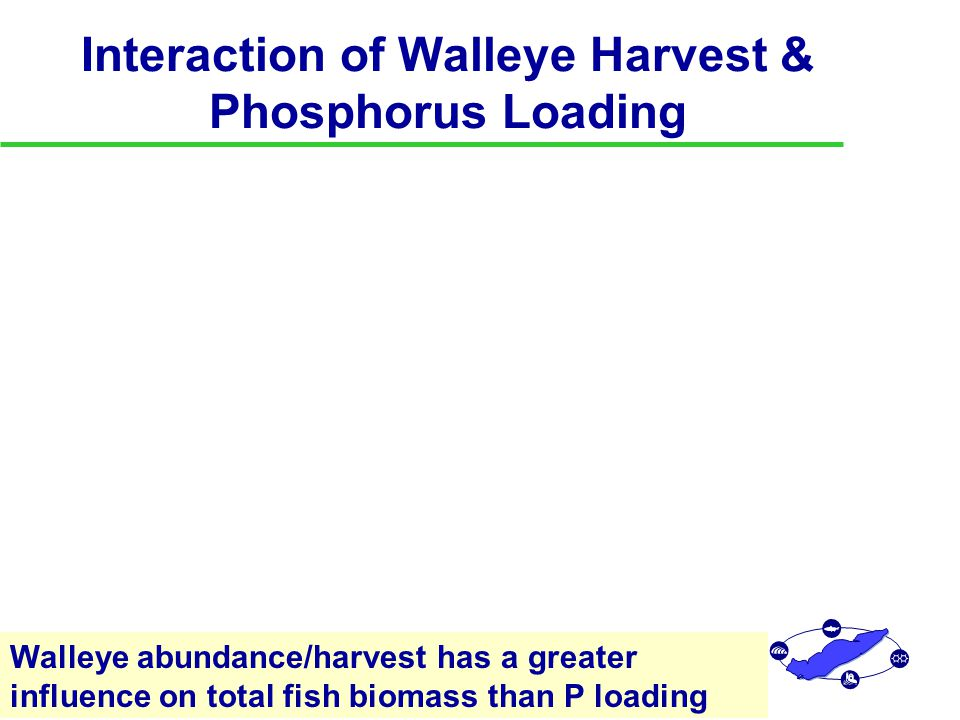 Interaction of Walleye Harvest & Phosphorus Loading Walleye abundance/harvest has a greater influence on total fish biomass than P loading