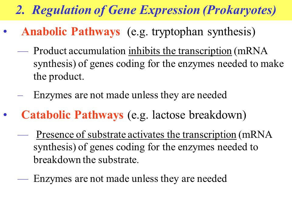 2. Regulation of Gene Expression (Prokaryotes) Anabolic Pathways (e.g. tryptophan synthesis) —Product accumulation inhibits the transcription (mRNA sy