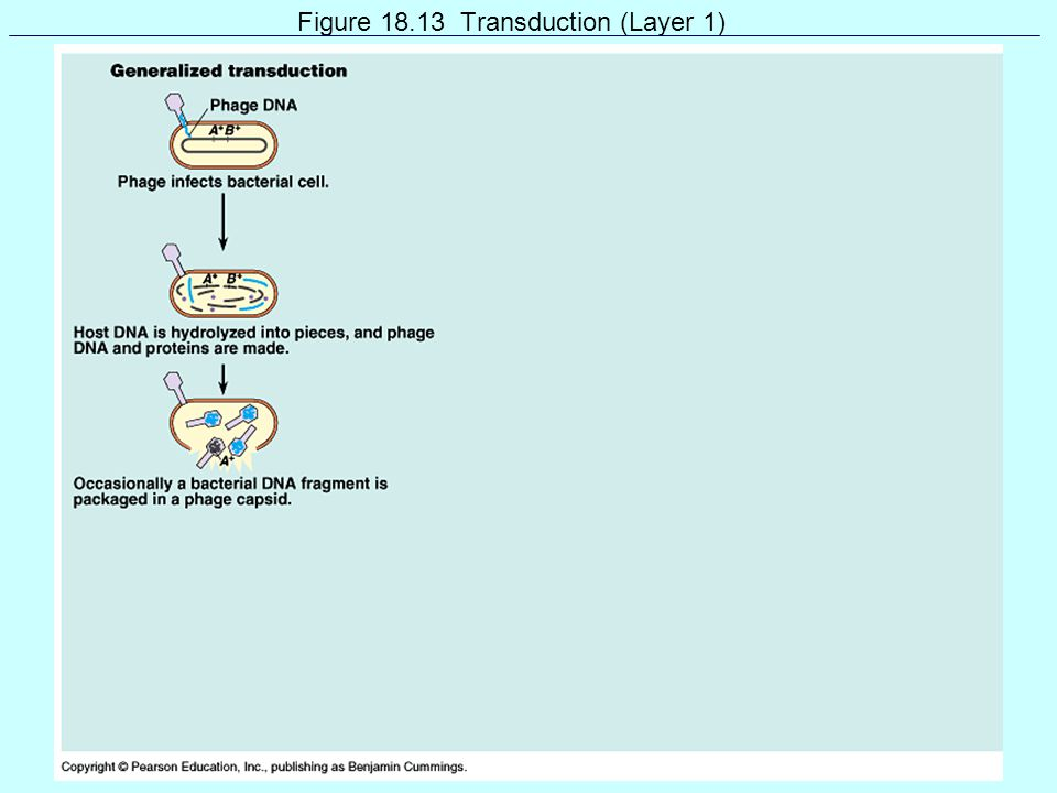 Figure 18.13 Transduction (Layer 1)