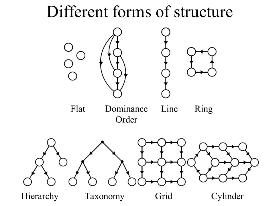 Different forms of structure Dominance Order LineRingFlat HierarchyTaxonomyGridCylinder
