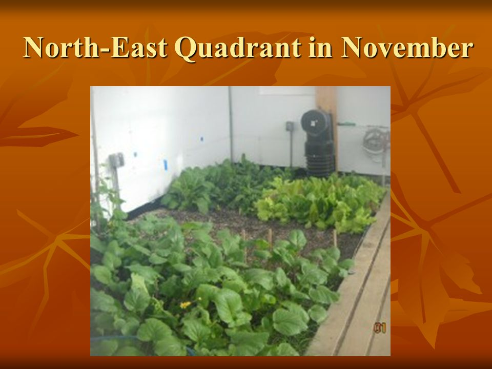 North-East Quadrant in November