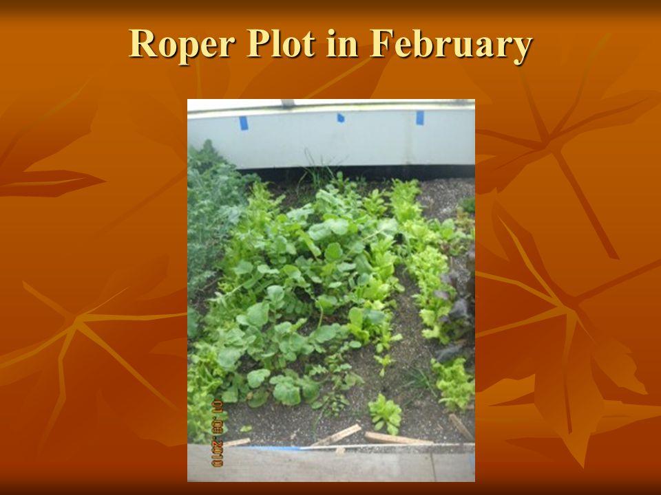 Roper Plot in February