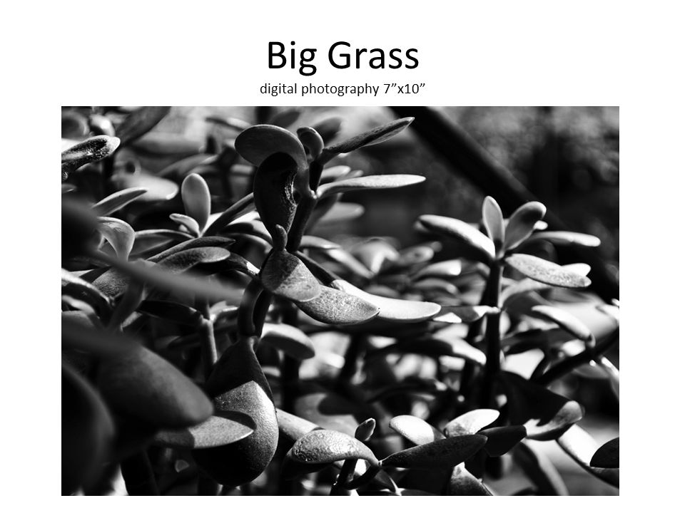 Big Grass digital photography 7 x10