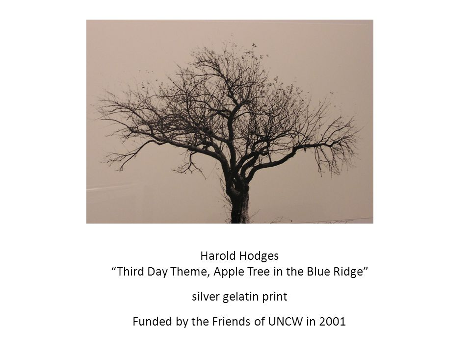 Harold Hodges Third Day Theme, Apple Tree in the Blue Ridge silver gelatin print Funded by the Friends of UNCW in 2001