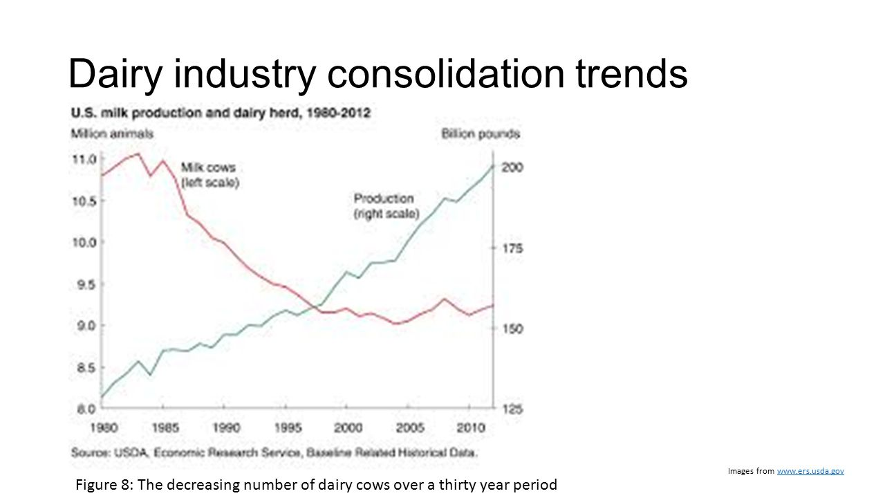 Dairy industry consolidation trends Images from www.ers.usda.govwww.ers.usda.gov Figure 8: The decreasing number of dairy cows over a thirty year peri
