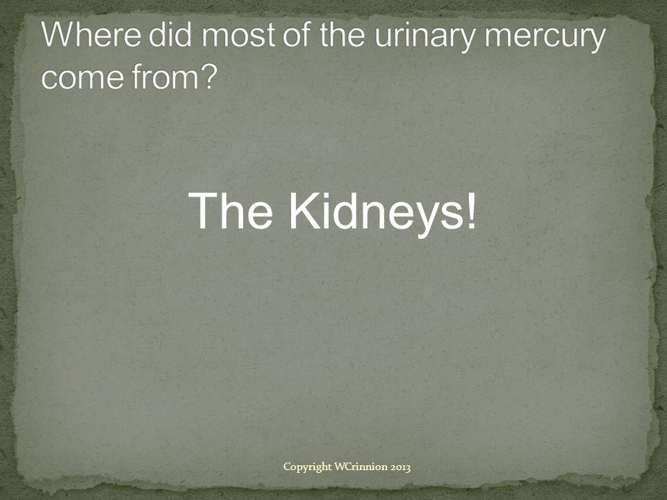 The Kidneys! Copyright WCrinnion 2013