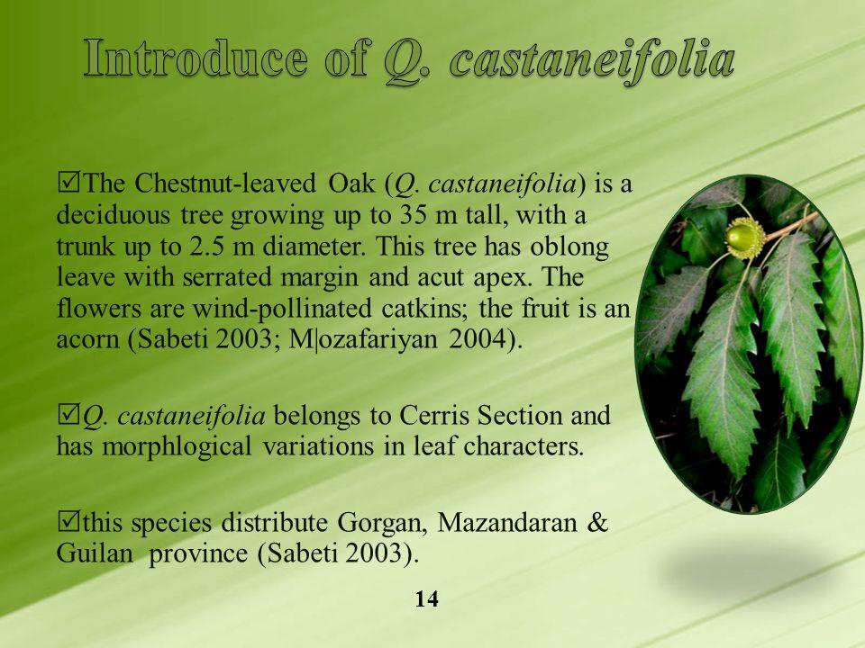  The Chestnut-leaved Oak (Q.