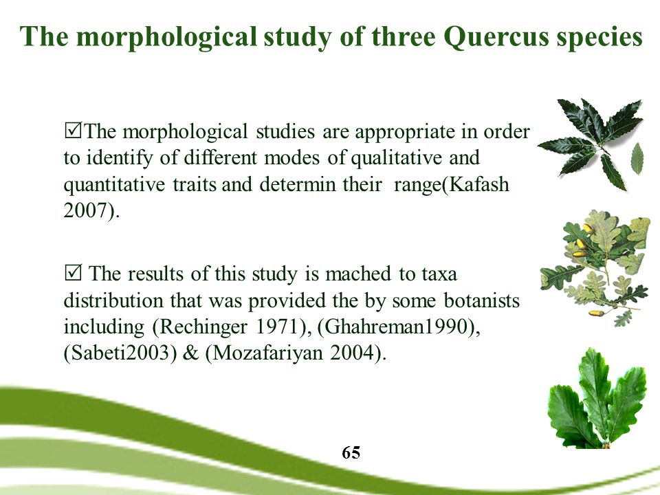 The morphological study of three Quercus species  The morphological studies are appropriate in order to identify of different modes of qualitative and quantitative traits and determin their range(Kafash 2007).