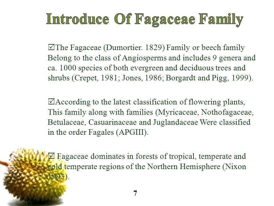  The Fagaceae (Dumortier.