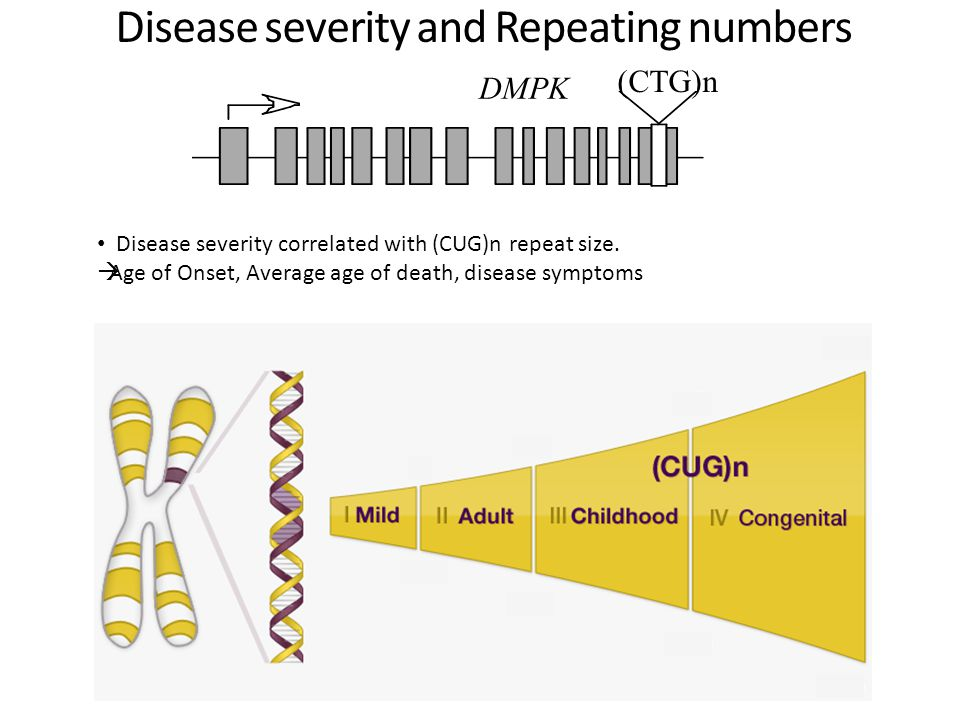 Disease severity and Repeating numbers Disease severity correlated with (CUG)n repeat size.