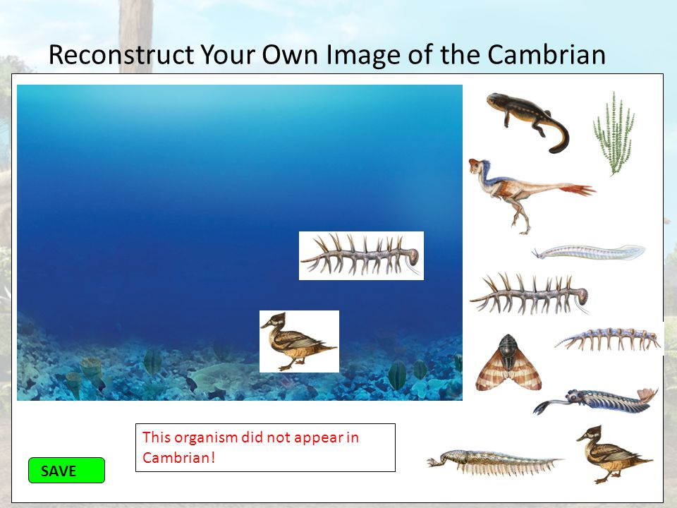 Reconstruct Your Own Image of the Cambrian SAVE This organism did not appear in Cambrian!
