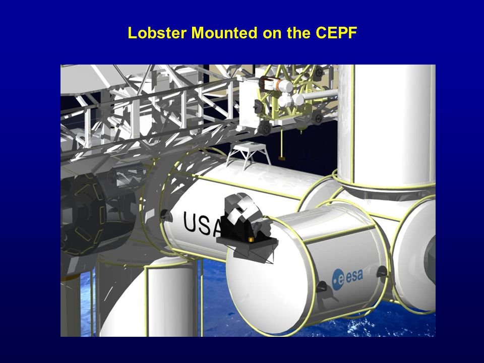 Lobster Mounted on the CEPF