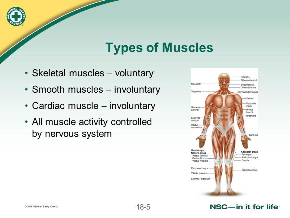 © 2011 National Safety Council 18-26 Types of Splints Rigid splints Soft splints Air splints (inflatable splints) Pneumatic splints Anatomic splints Improvised splints