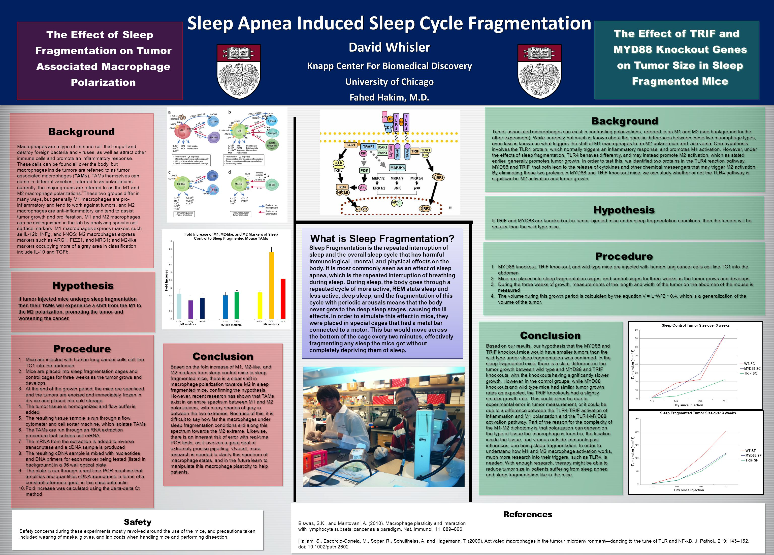 Sleep Apnea Induced Sleep Cycle Fragmentation David Whisler Knapp Center For Biomedical Discovery University of Chicago Fahed Hakim, M.D.