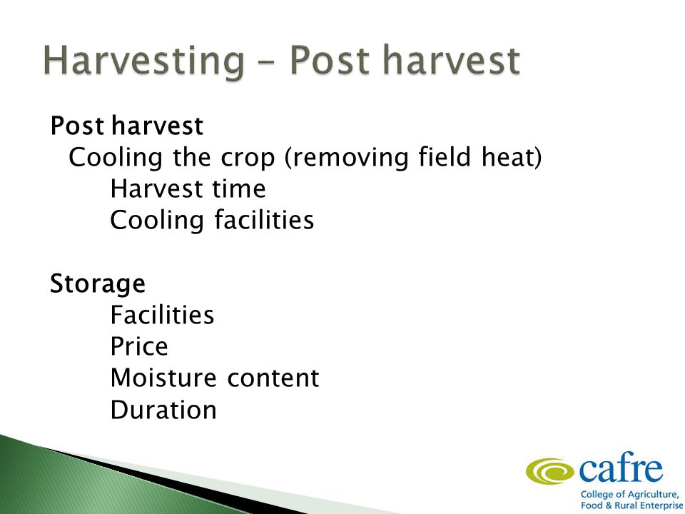 Post harvest Cooling the crop (removing field heat) Harvest time Cooling facilities Storage Facilities Price Moisture content Duration