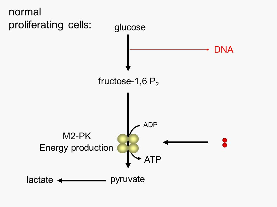 glucose fructose-1,6 P 2 pyruvate lactate ADP ATP normal proliferating cells: DNA Energy production M2-PK