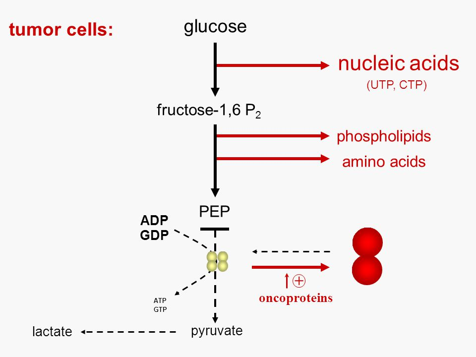 glucose ADP ATP pyruvate lactate fructose-1,6 P 2 oncoproteins + nucleic acids phospholipids amino acids tumor cells: PEP GDP GTP (UTP, CTP)