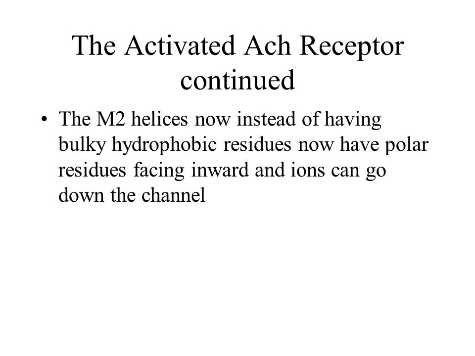 The Activated Ach Receptor continued The M2 helices now instead of having bulky hydrophobic residues now have polar residues facing inward and ions can go down the channel