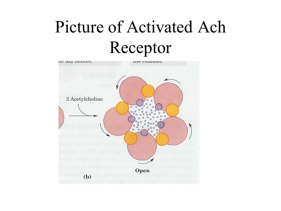 Picture of Activated Ach Receptor