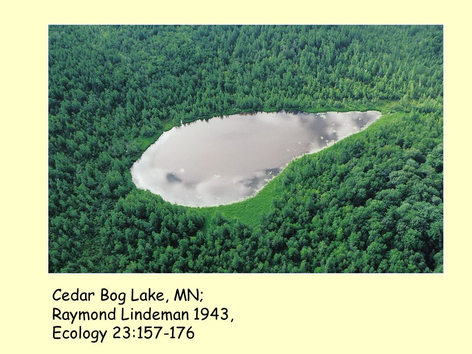 Cedar Bog Lake, MN; Raymond Lindeman 1943, Ecology 23:157-176