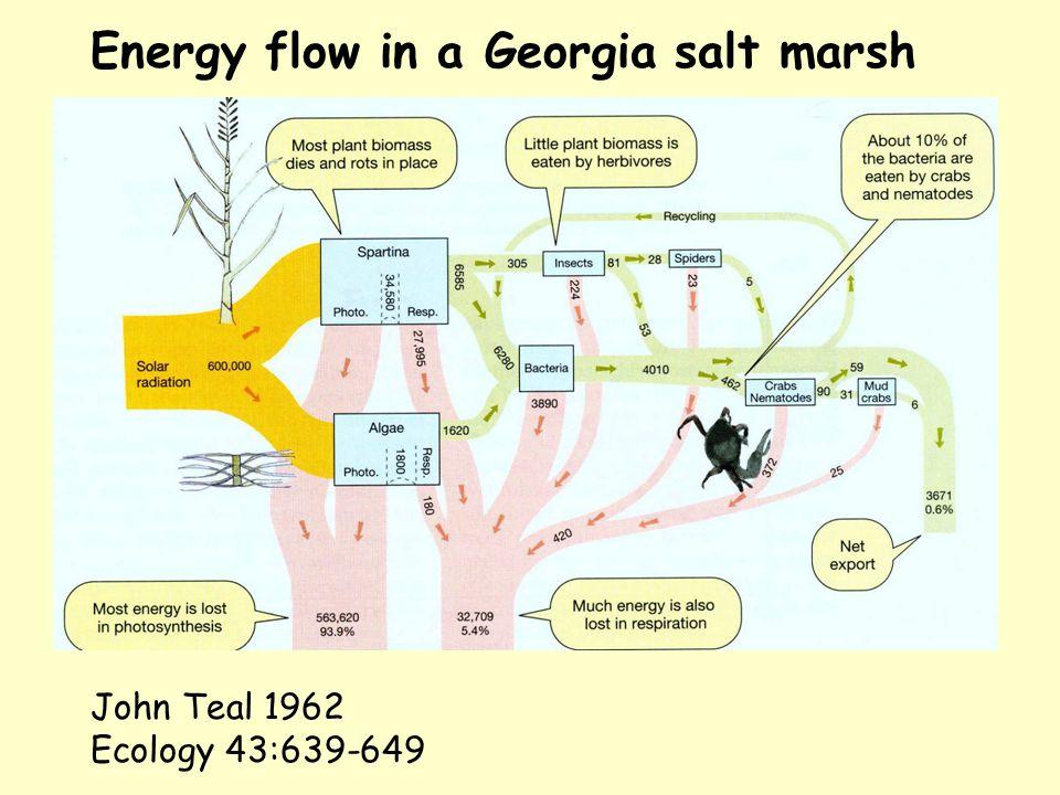 Energy flow in a Georgia salt marsh John Teal 1962 Ecology 43:639-649